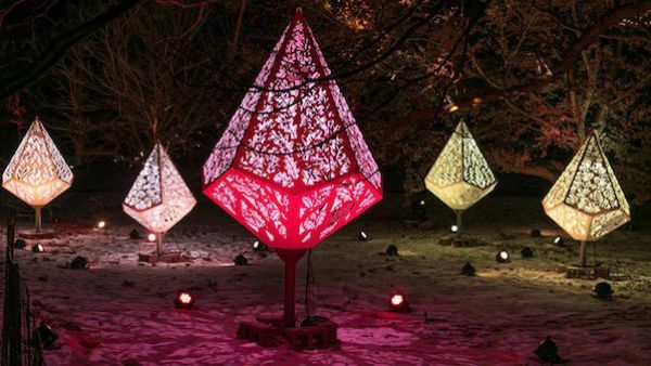 You can see this year's Illumination at the Morton Arboretum from the car. Photo: Courtesy of the Morton Arboretum